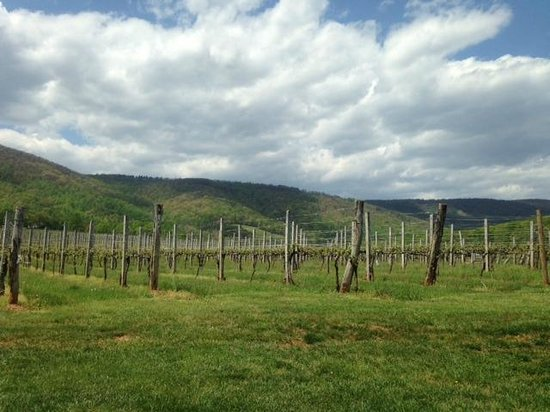Afton Mountain Vineyards: View from Afton Mountain Winery