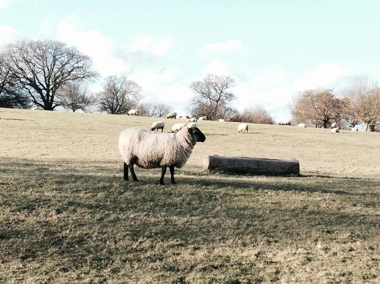 The Ickworth Hotel: make way for sheep