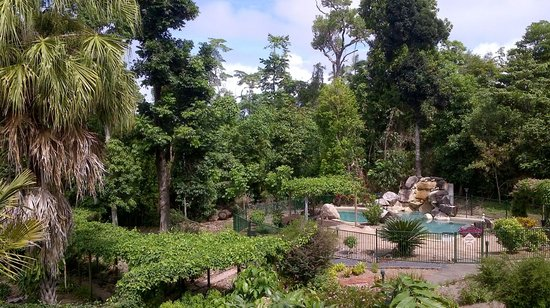 Licuala Lodge: Pool and gardens
