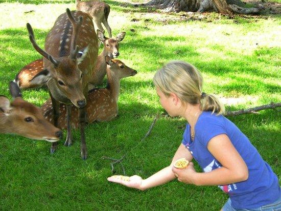 Paul Bunyan's Animal Land: Come and get  it!