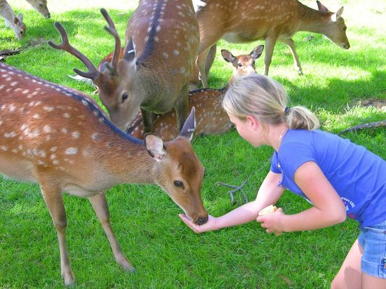 Paul Bunyan's Animal Land: Deer Feeding