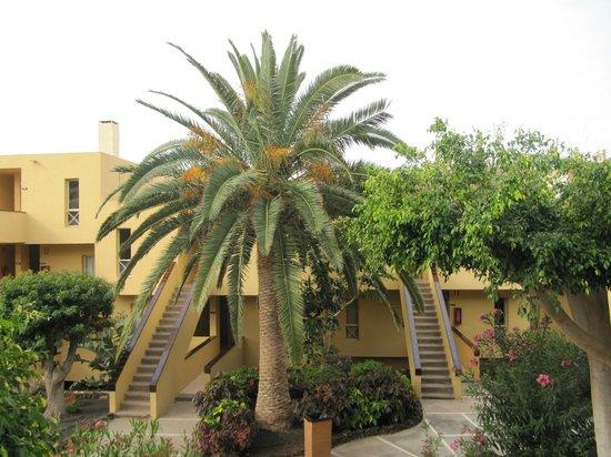 Sol Jandia Mar Apartments: palmier