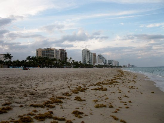 Bahia Mar Fort Lauderdale Beach - a Doubletree by Hilton Hotel: View up the coast from Bahia Mar