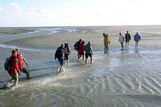 Wattführergemeinschaft Dithmarscher Nordseeküste