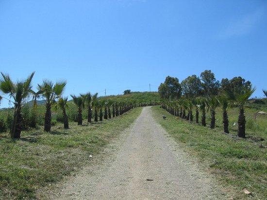 Agriturismo Papa Sisto: Selbst die (nachts beleuchtete) palmengesäumte Auffahrt sucht seinesgleichen