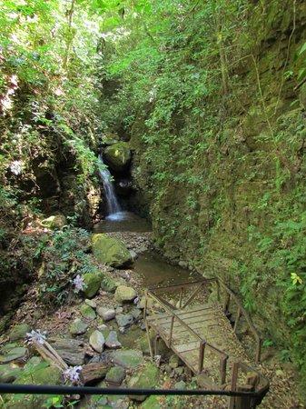 Ecological Sanctuary: Cascada pequeña