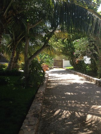Amarte Hotel: Path leading to villas