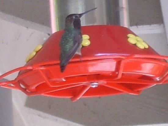 Ferrando's Hideaway Cottages: Hummingbird