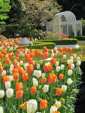 The Butchart Gardens : Spring Borders