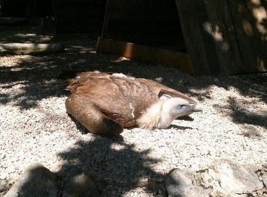 Rocher des Aigles: Oiseau au repos