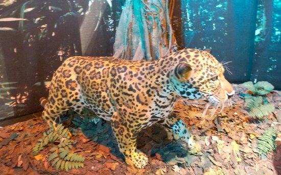 Museo del Oro Precolombino : Part of the interactive attractions