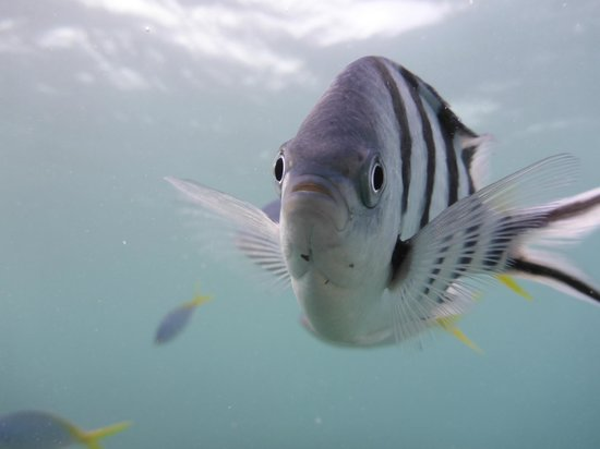 Great Adventures: curious fish