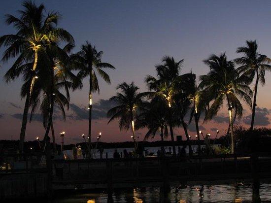 Islamorada Fish Company : Beautiful view,especially for sunset