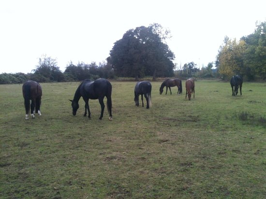 Territorial Bed and Breakfast and Barn : Horses in the pasture