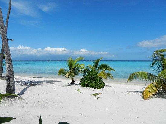 Sofitel Moorea Ia Ora Beach Resort : View towards beach from beach bungalow