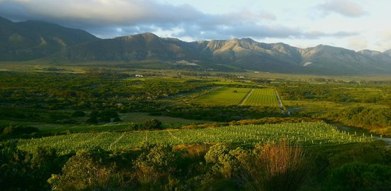 Springfontein Wine Estate