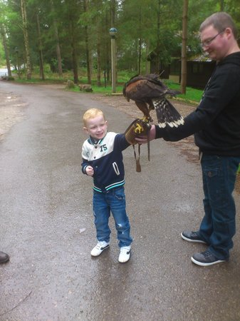 Centre Parcs Whinfell Forest: Hawk in the Park