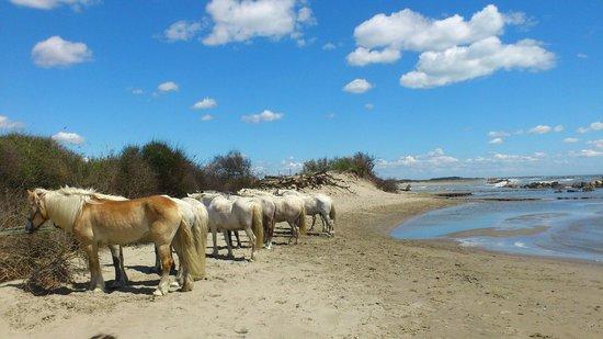 Promenade à cheval, Chez Elise : Pause de midi au Grand Radeau