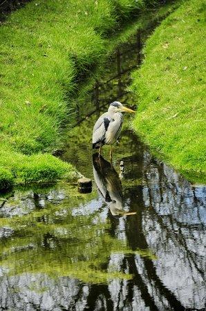 Arboretum Trompenburg: И цапле нашлось место в парке