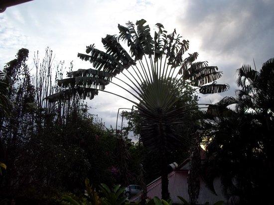 Les Jardins de l'esperance : Végétation surprenante