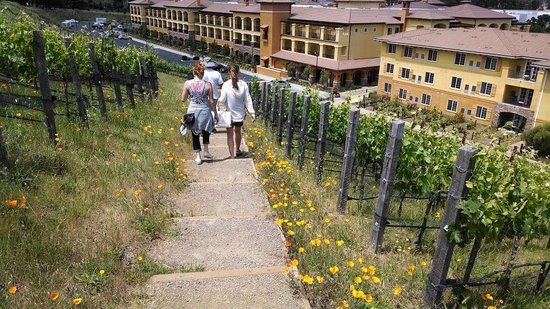 The Meritage Resort and Spa: Vineyard