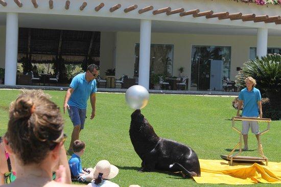 Grand Velas Riviera Nayarit: Sea Lion show on the lawn