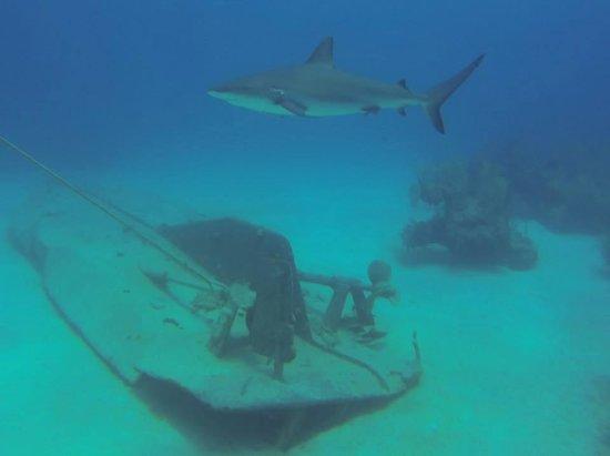 Sunn Odyssey Divers: Shark Alley