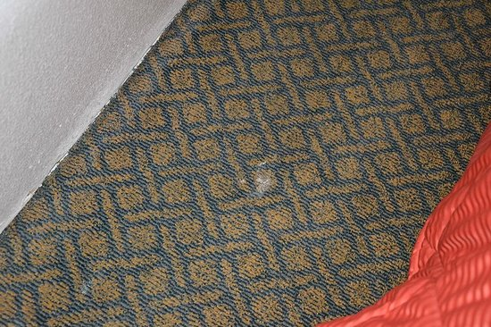 Comfort Inn - Los Angeles / West Sunset Blvd.: In the room