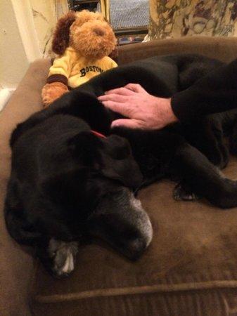 Fairmont Copley Plaza, Boston: Canine ambassador Cate