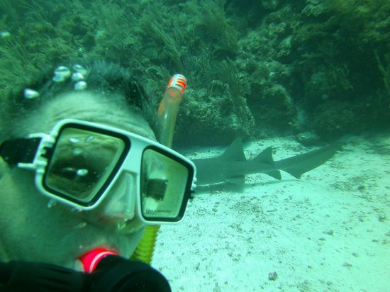 Ecologic Divers : Selfie with a shark