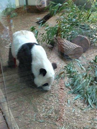 Zoo Atlanta: Don't get to see Pandas very often.