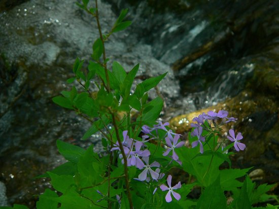 Falling Springs Waterfall: Phlox