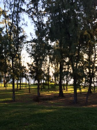 Hawaii Island Retreat at Ahu Pohaku Ho`omaluhia : Gentle breeze thru trees outside of yoga room