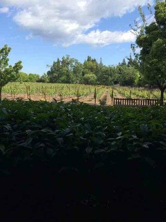 Villagio Inn and Spa: vineyard outside of room