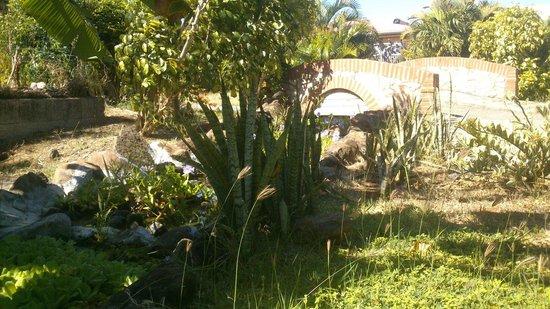 HOTEL CAP MACABOU: Côté jardin, superbe.