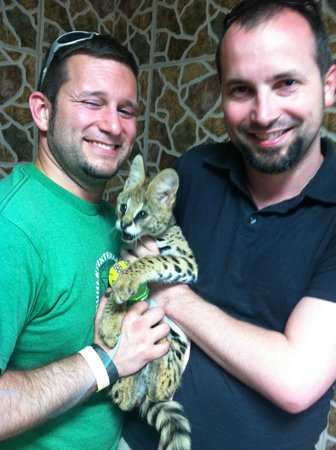 Zoological Wildlife Foundation: Serval Play Time