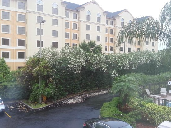 The Floridian Hotel and Suites: View from room