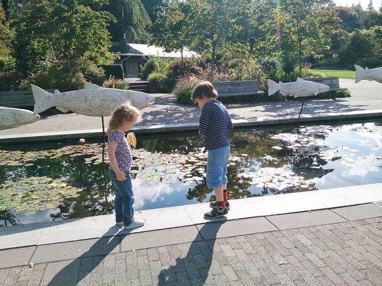 VanDusen Botanical Garden : Lots of water features