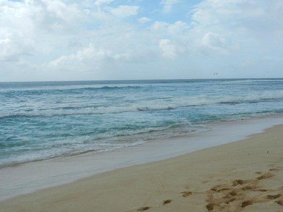 Roberts Hawaii: Beach on North Shore