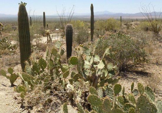 Arizona-Sonora Desert Museum : Bench and walking trail.