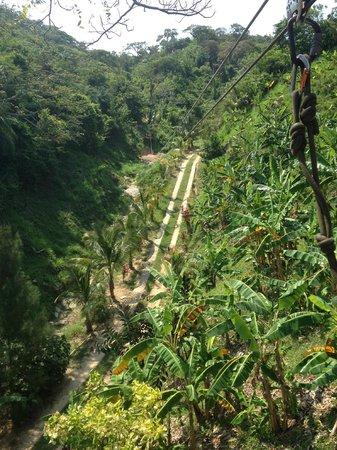 Jungle Top Zipline Adventure: Beautiful!