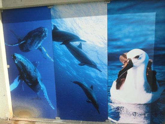 Aracaju Aquarium - Tamar: Entrada do Oceanário