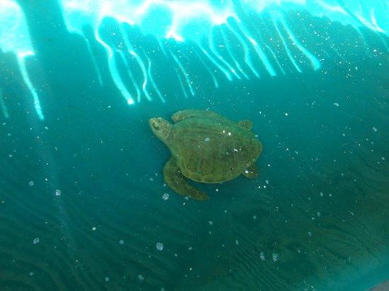 Aracaju Aquarium - Tamar: Aquário de tartarugas