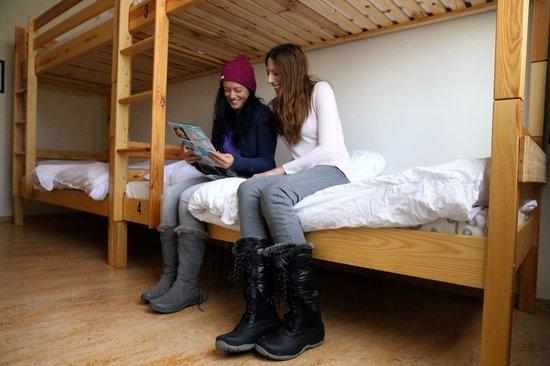 Bus Hostel: Dorm Room Bunk Beds
