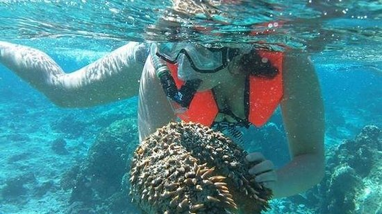 Pure Snorkeling by Reef Discovery: Spiky Sea Cucumber!