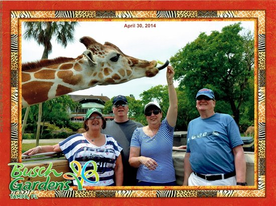 Jardines Busch: Photo of group during Serengeti Safari while feeding giraffes