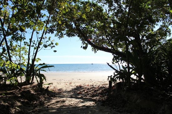 Daintree National Park: Walking to the beach
