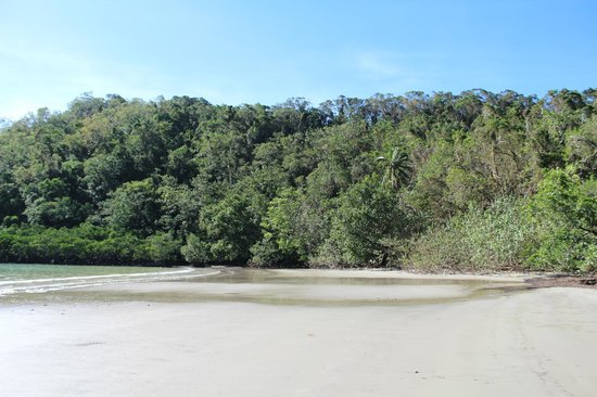 Daintree National Park: The rainforest meets the beach