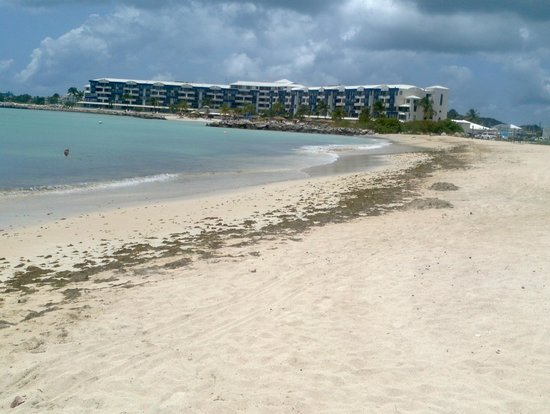 Atrium Beach Resort and Spa : seaweed on the beach