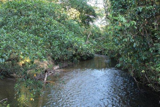 Daintree Rainforest: River photo